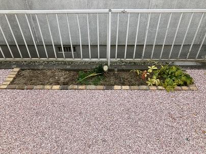 花壇まわり
