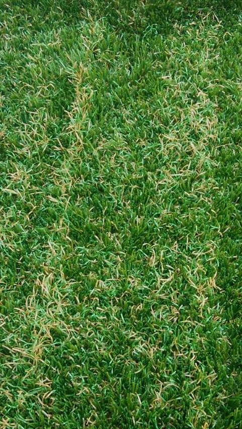 人工芝が縮れる