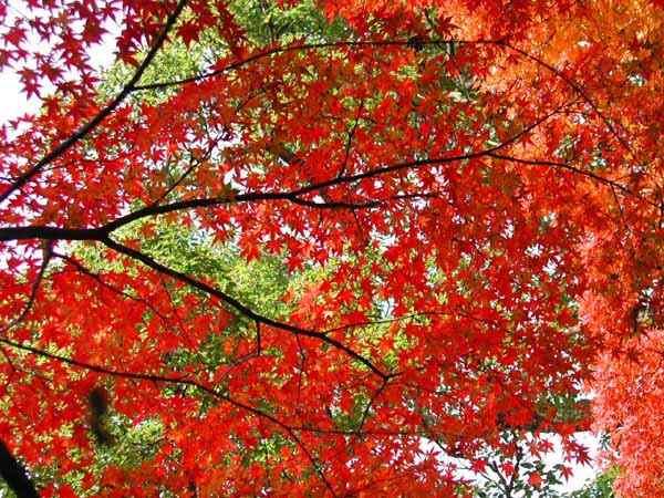 高良山の紅葉