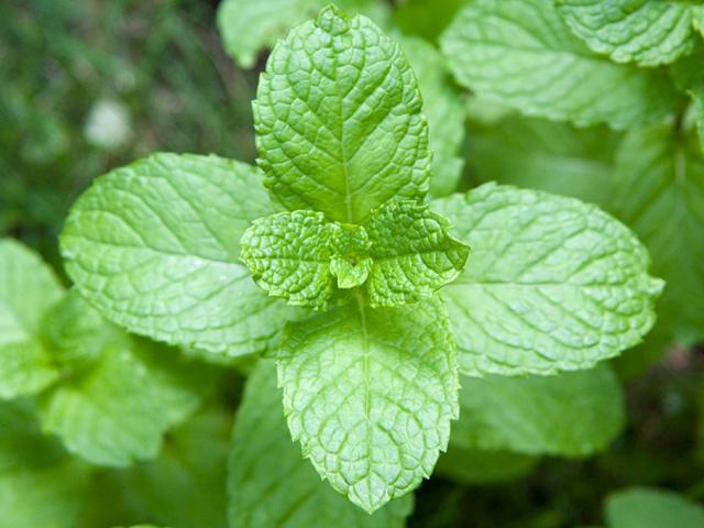 herb2_L