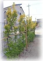 kakisoe-ikegaki